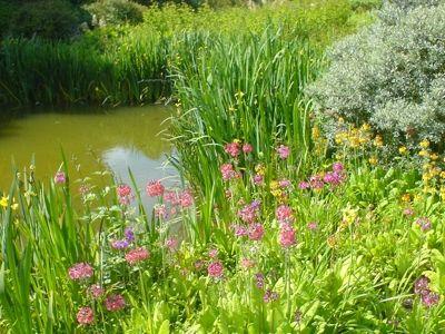 bog gardens - Bog Garden
